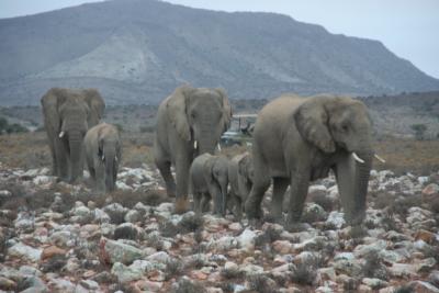 IMG_4223 elefantiA