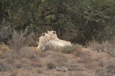 IMG_4312 leoni bianchi
